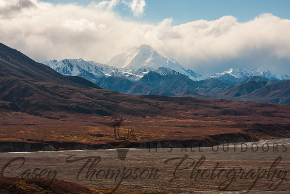"""Denali and Foothills"""