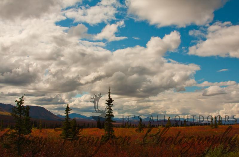 Denali National Park - August 2011