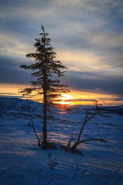 """""""Alaska Tundra"""" - January 5, 2013"""