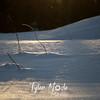 779  G Snowy Twigs