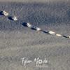 1360  G Tracks in Snow
