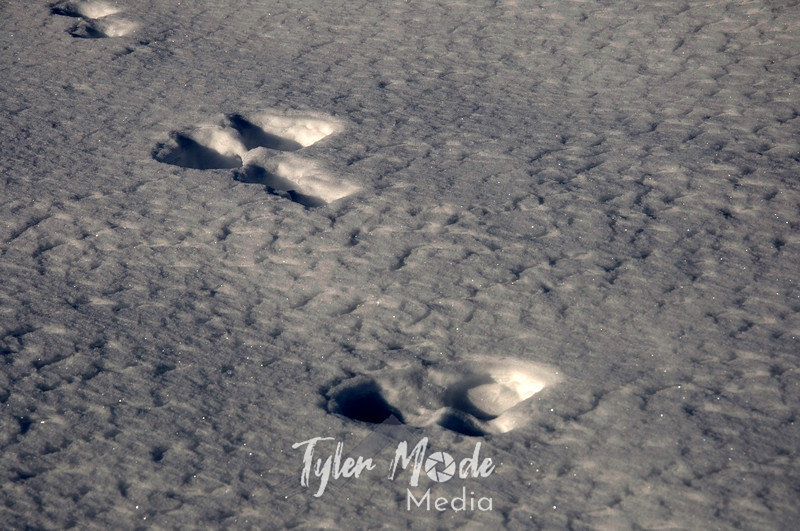 1391  G Hare Tracks