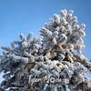 1710  G Rime Tree
