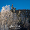 1690  G Chena Frosty Trees