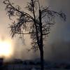 1696  G Misty Tree