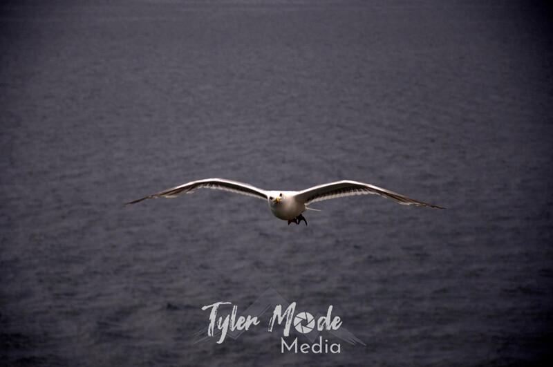 1128  G Seagulls