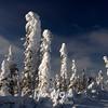 278  G Snowy Trees West