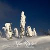 287  G Snowy Trees North