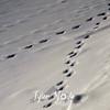 1002  G Tracks