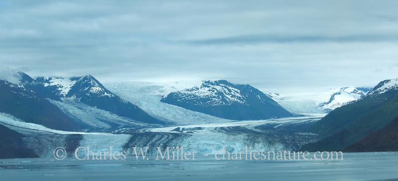 The Harvard Glacier, College Fjord
