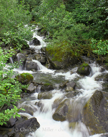 A stream flows from the Mendenhall Glacier