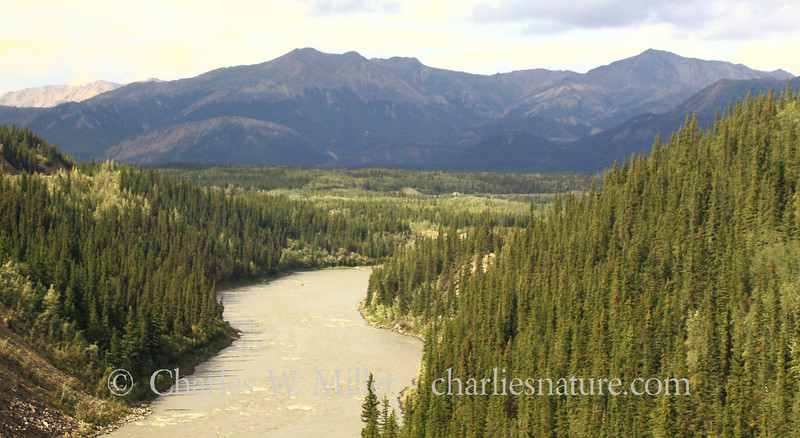 The Nenana River