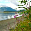 Alaska Landscapes :