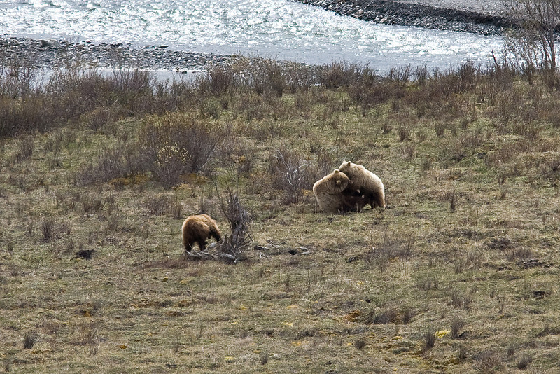 IMG_9689 Denali Alaska