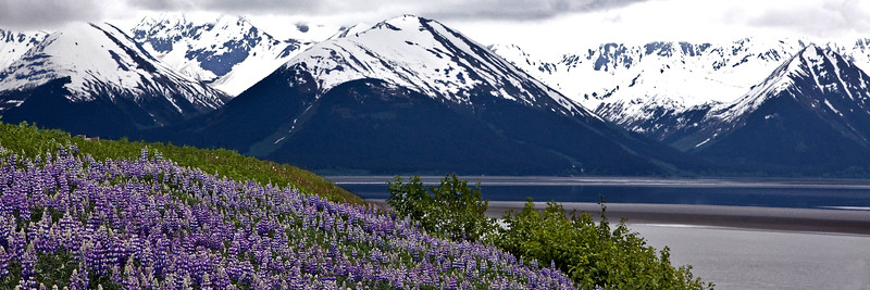 Flowers along Turn Again Arm. Kenai Alaska