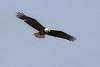 Bald Eagle by the Homer Spit Kenai Alaska