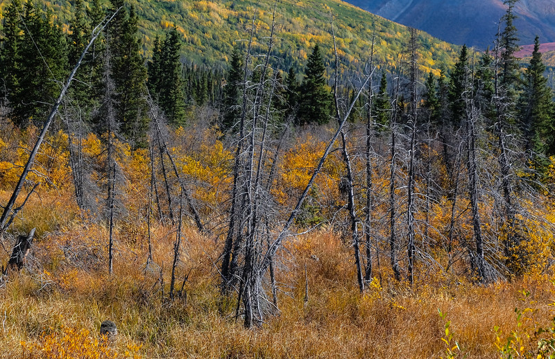 Remains of the 1999 forest fire