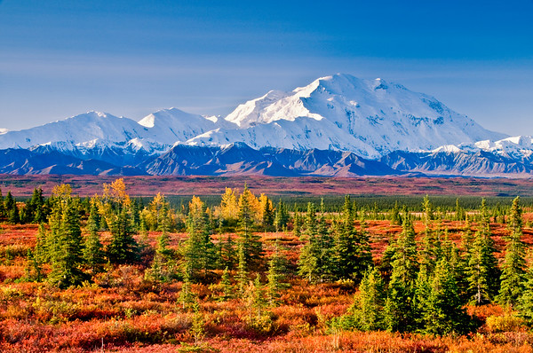 Autumn in Denali.