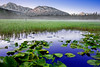 Alaska, Chugach National Forest, Seward Highway, Sunrise, Pond, Wild Water lily, Landscape, 阿拉斯加 风景