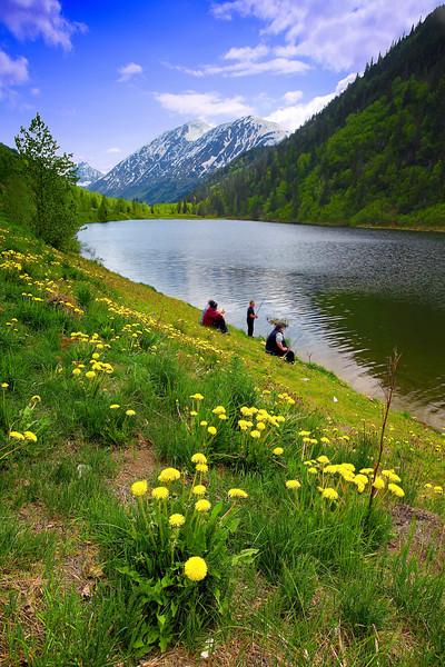 Alaska, wild flowers, Lake, Kenai Peninsula Landscape, 阿拉斯加 风景