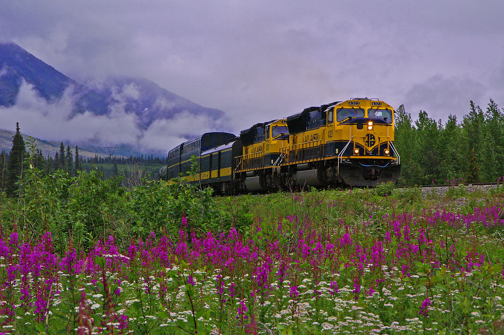 The Denali Star crosses Broad Pass on a dreary summer day. The purple and white flowers help to brighten up the scene.