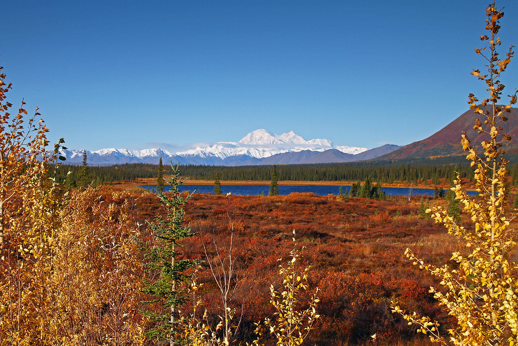 10.12.13: On a beautiful fall morning Denali as seen from Summit Lake near Cantwell, Alaska.