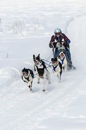 North American Open Dog Sled Races