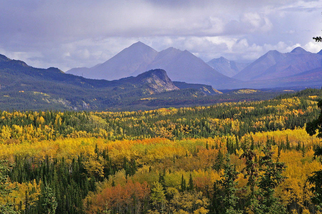 The view from Denali Park road is outstanding