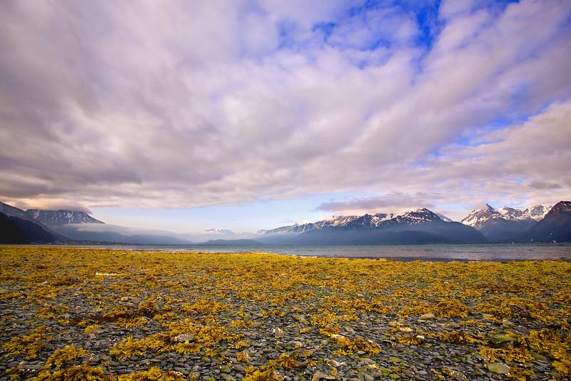 Alaska, Resurrection Buy, Seward Landscape, 拉斯阿加 风景