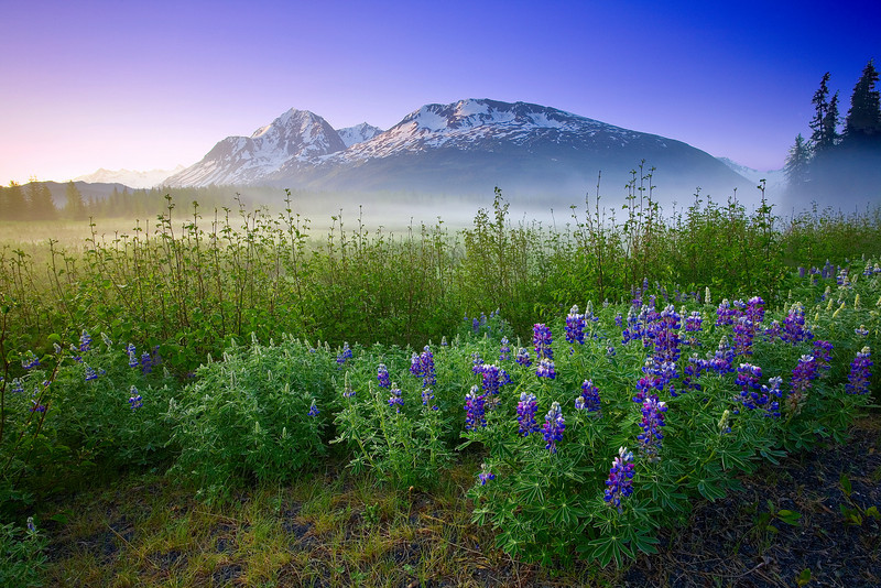 Alaska, Chugach National Forest, Seward Highway, Sunrise, Fog, Wildflowers, Landscape,  阿拉斯加 风景