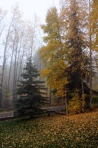 Fairbanks' misty fall. Sept. 2008
