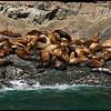 Sea seals