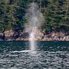 Whale<br /> Kenai Fjords National Park<br /> 2014