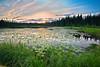 Wild Lilies, Alaska, Sunset, Wrangell-St Elias National Park Landscape, 阿拉斯加 风景