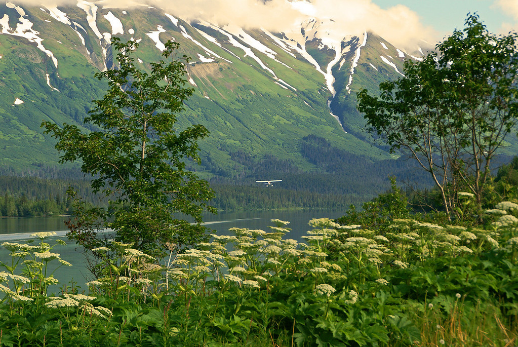 A float plane takes off from Upper Trail Lake, near Moose Pass, Alaska.
