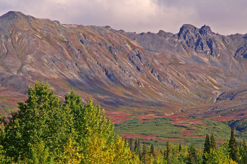 The fall colors start early, as compared to the lower 48, and offer a tremendous variety of color as seen here at Hurricane, Alaska.