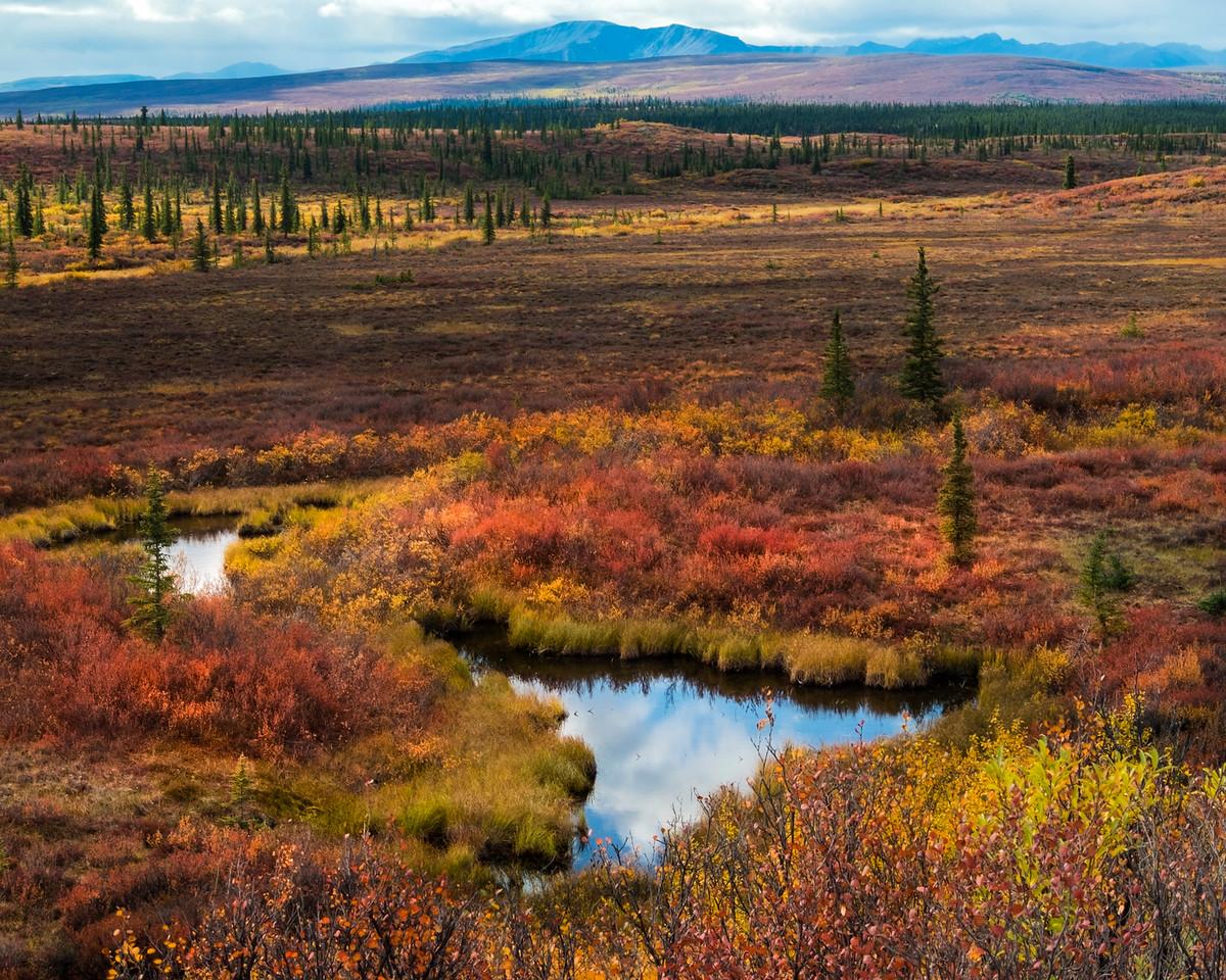Mooose Ponds on the Denali Highway