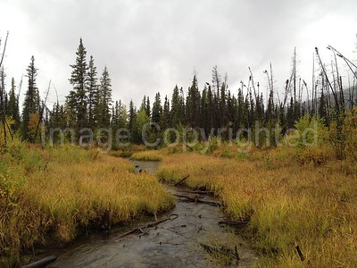 Marsh on Chena Hot Springs rd 8/31/12