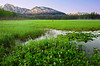 Alaska, Chugach National Forest, Seward Highway, Sunrise, Pond, Wildflowers, Landscape, 阿拉斯加 风景