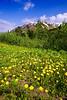 Alaska, wild flowers,  Kenai Peninsula Landscape,  阿拉斯加 风景