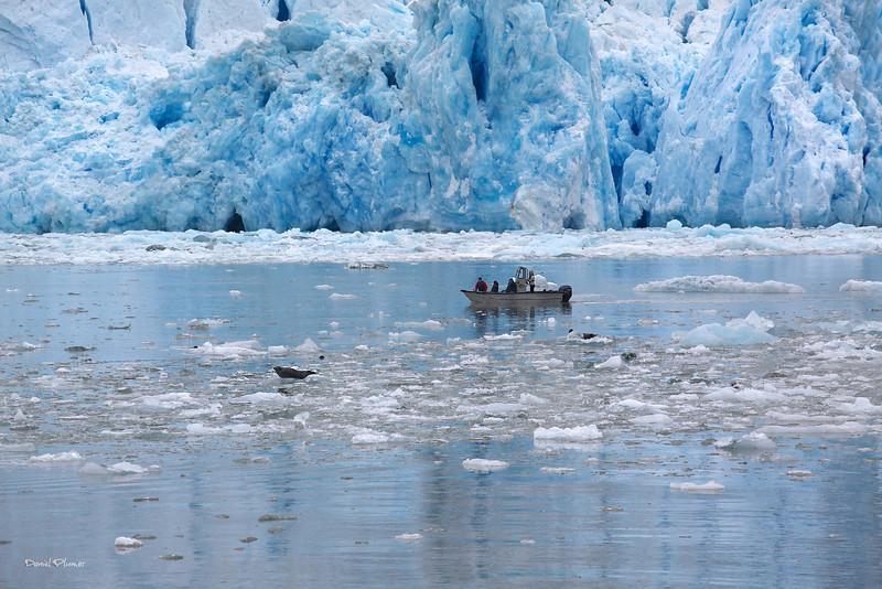 Trolling Glaciers