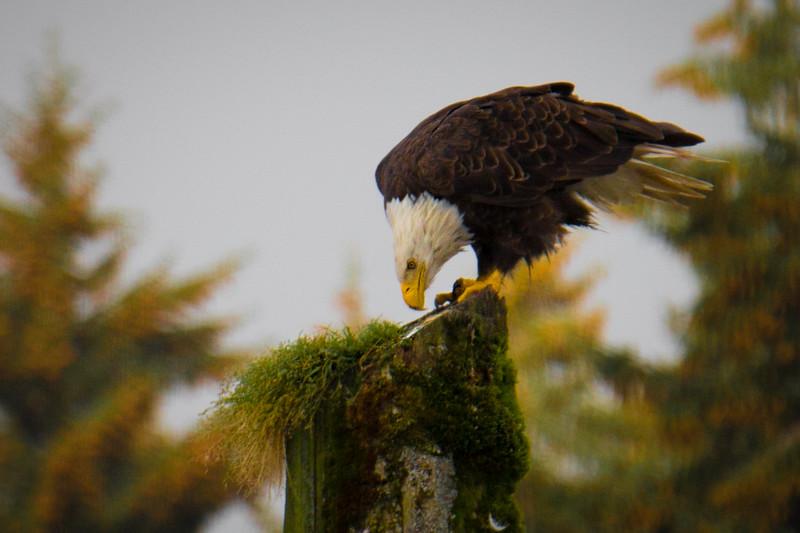 Alaska14-