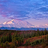 Denali catches the first rays of sun as the clouds purple above it.