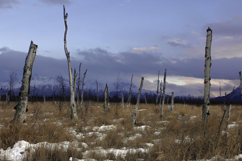 December 2006, off the Glenn Highway near Wasilla, Alaska