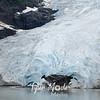 130  Bear Glacier