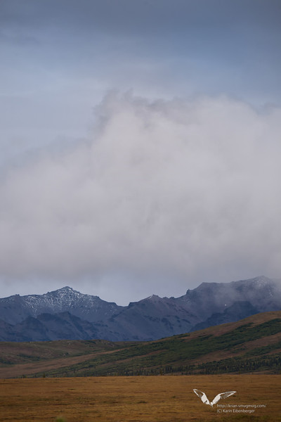 August 2011. Actually not Denali Ntp. any more, but looking into the National park area from Stampede Road.