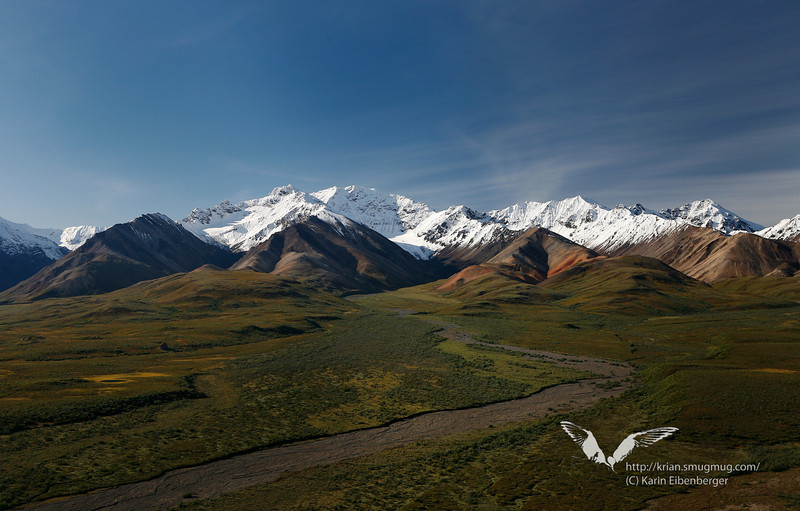 August 2011. Denali National Park.
