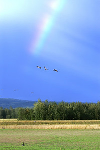 Rainbow at Sandhill Crane Festival in Fairbanks, Alaska
