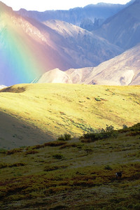 Rainbow w/ caribou in Denali National Park