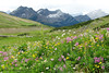 Wildflowers above Lemming Lake, Kakwa Wildlands Park, Alberta